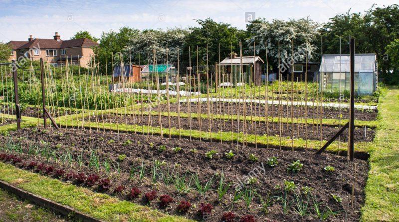 terreno-coltivazione-usucapione