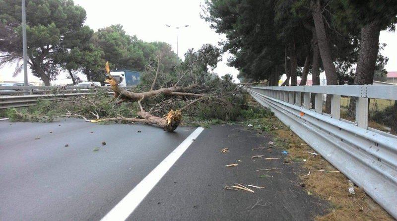 albero-carreggiata-danni-responsabilità